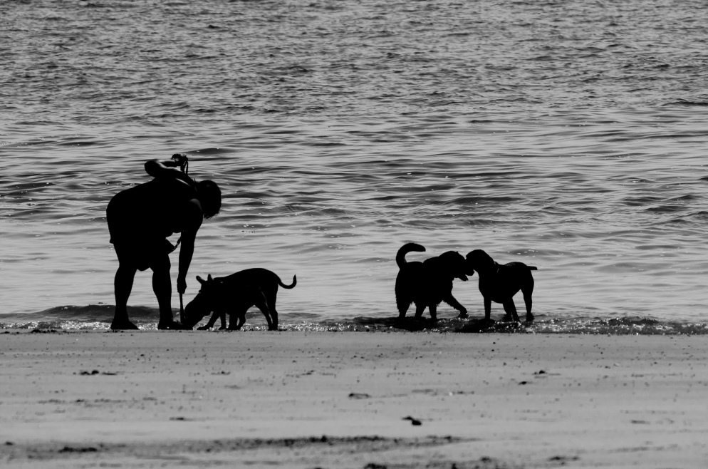 Dogs with their owner on a Hampshire beach.
